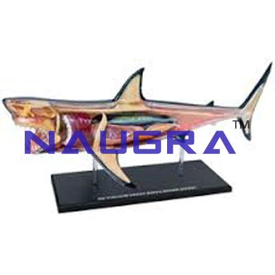 Shark Fish Anatomy Model SKU-IELAB004013, Laboratory Equipments ...